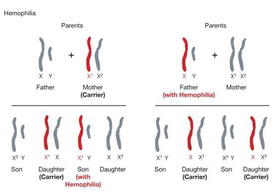 Definition of sex linked genes images 94