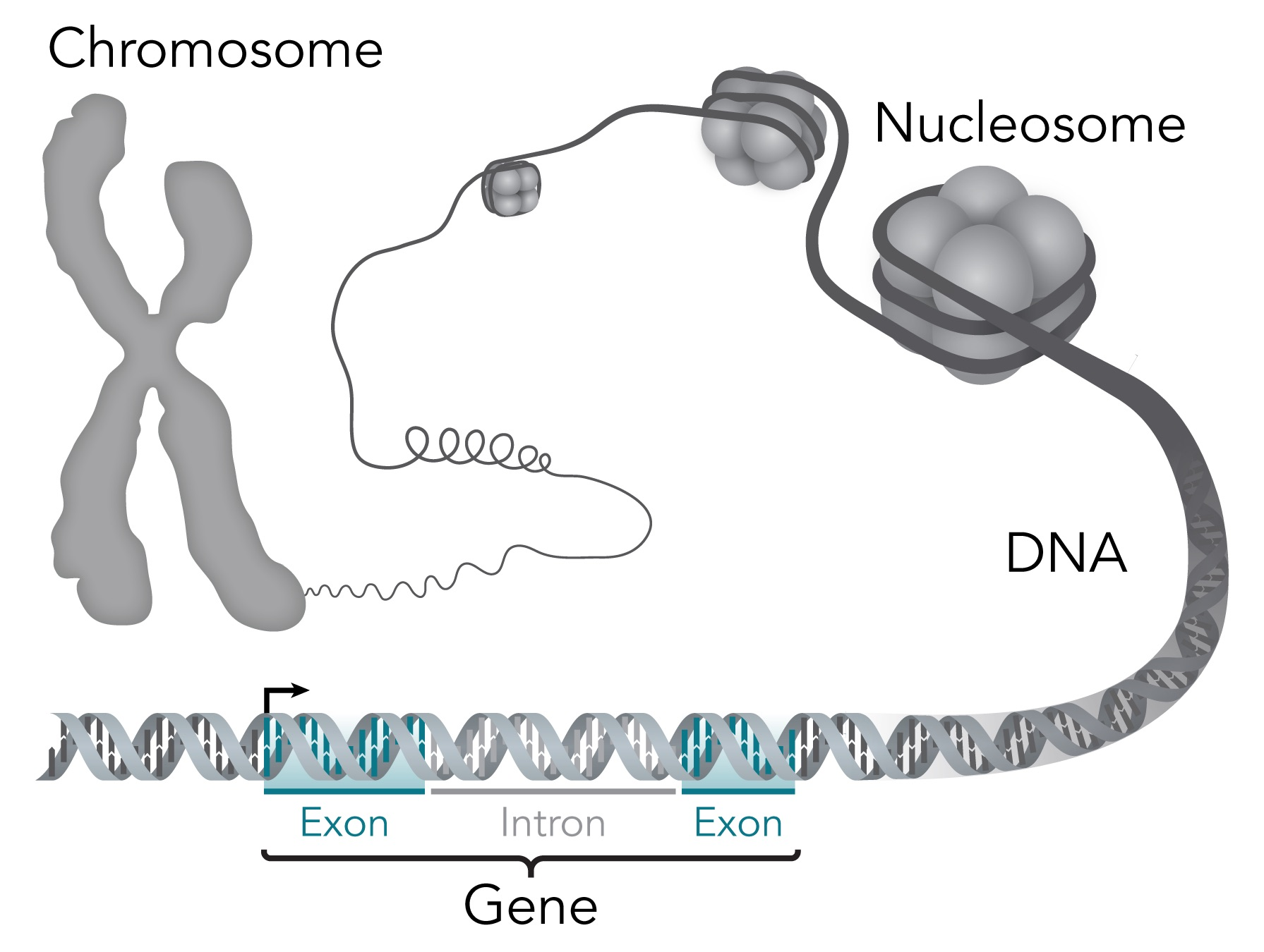 Genome BC Glossary, genomics and life sciences glossary terms