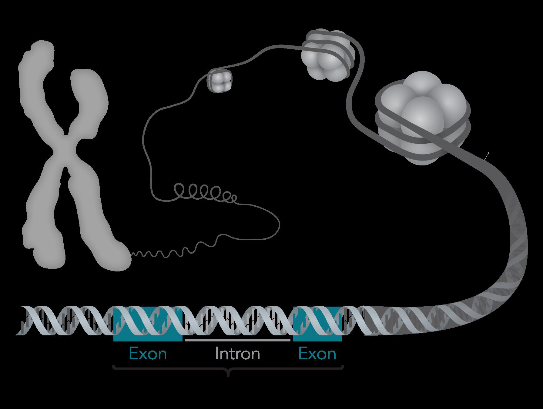 Glossary Genome Bc
