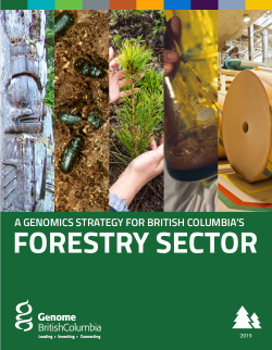 BC Forestry Sector Strategy.PDF